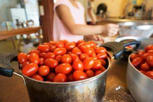 トマトジュース用イタリアントマト