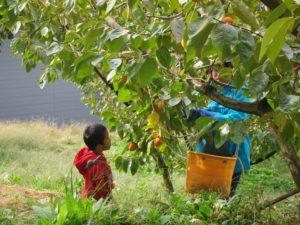 柿畑の写真