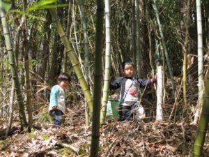 原木シイタケを収穫に行く