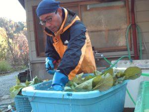 野沢菜洗い