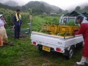フルーツとうもろこし収穫風景1