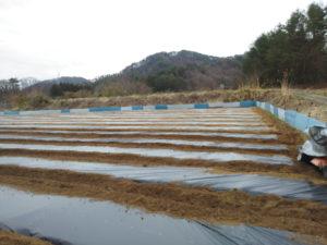 トウモロコシ畑の準備